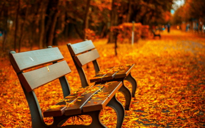 3 Steps to Remaining Productive, while Transitioning to Autumn